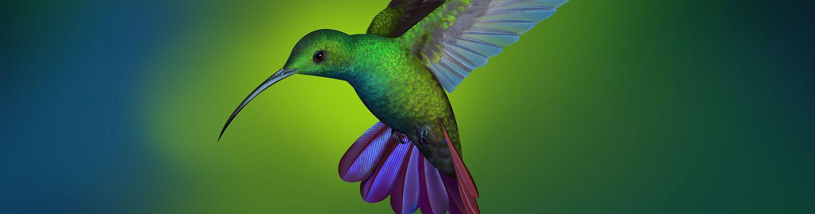 蜂鸟 绿色背景4k超高清壁纸精选