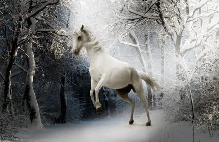 冬天 雪 森林 动物 马 白马 眼睛 4K高端电脑桌面壁纸