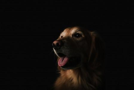 狗 舌头 脸 棕色狗宝宝 5K高端电脑桌面壁纸