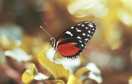 蝴蝶,翅膀,叶子,4k高端电脑桌面壁纸