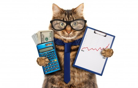 猫 领带 眼镜 金钱 美元 计算器 猫会计4K高端电脑桌面壁纸