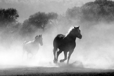 马群 雾 自然 野生 自由 奔跑 4K图片