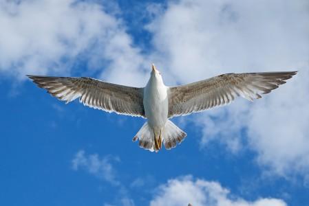 海鸥天空飞翔5K高端电脑桌面壁纸
