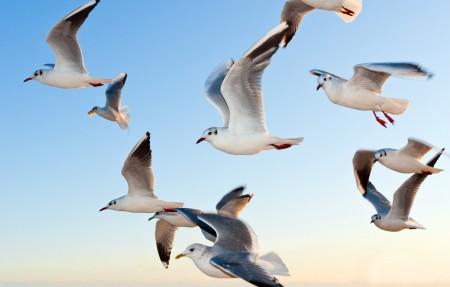海鸥 鸟 天空飞翔 4K高端电脑桌面壁纸