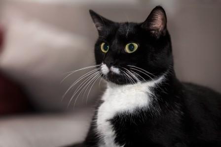 猫 眼睛 胡子 4K高端电脑桌面壁纸