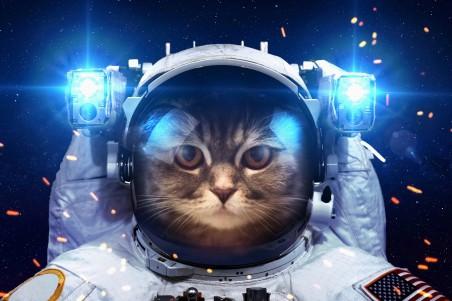 猫 太空 宇航员 5K高端电脑桌面壁纸
