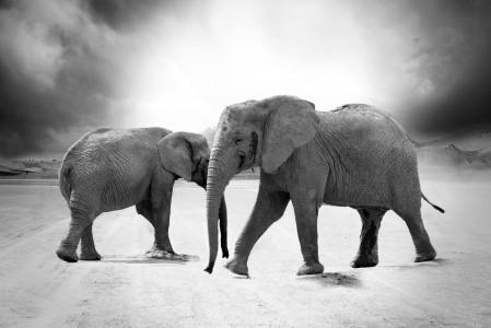 大象 象牙 动物 非洲 野生动物园 4K高端电脑桌面壁纸