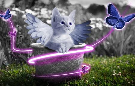 小猫 可爱 篮子 天使 翅膀 蝴蝶 唯美艺术 5K高端电脑桌面壁纸
