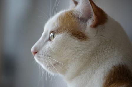猫 猫的脸 美猫 4K高端电脑桌面壁纸