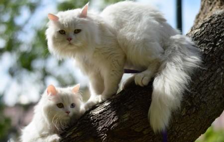 二只白的猫 树 4K高端电脑桌面壁纸