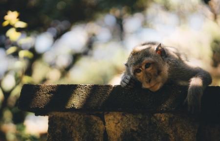 可爱猴子唯美4K摄影图片