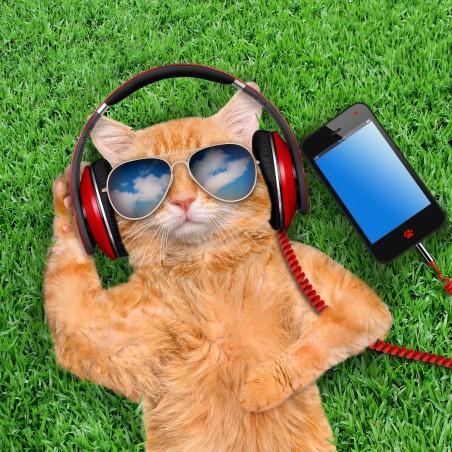 猫 智能手机 草地 眼镜 4K高端电脑桌面壁纸