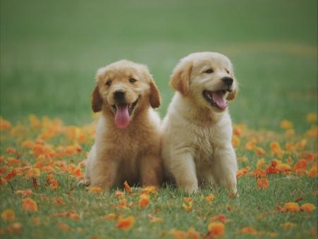 草地上的两只可爱小狗5k动物图片