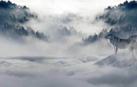 狼 狼群 雪狼 动物世界 捕食 野生动物 雪 4K高端电脑桌面壁纸