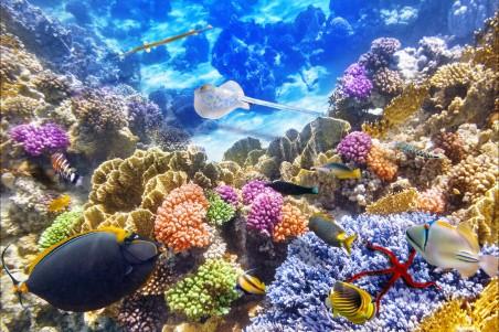 海底世界 珊瑚礁 4K高端电脑桌面壁纸