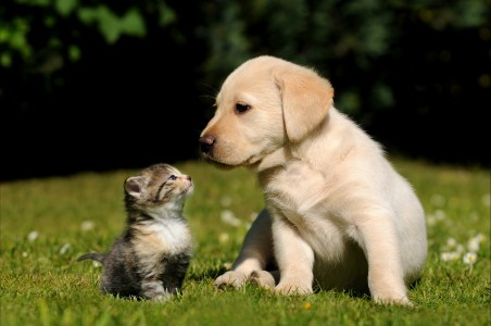 小猫和小狗,朋友,草地,可爱动物图片