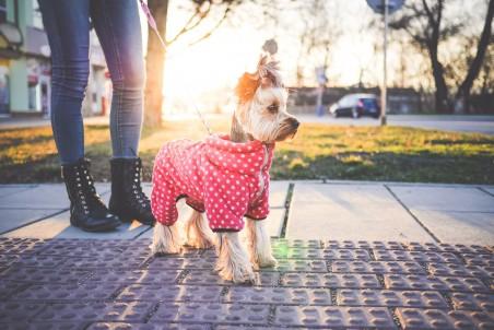 遛狗的女孩4k摄影图片