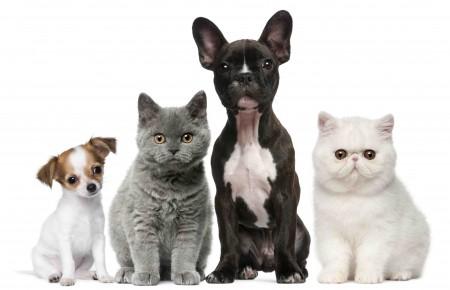 动物 猫和狗 8K高端电脑桌面壁纸