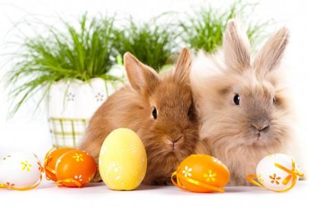 复活节 可爱兔子 彩蛋 4K高端电脑桌面壁纸