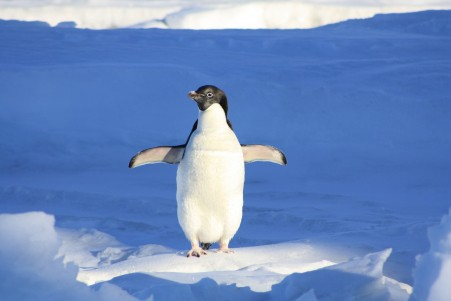 企鹅 蓝色 水 动物 4K高端电脑桌面壁纸
