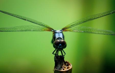 蜻蜓微距摄影高清4k高端电脑桌面壁纸