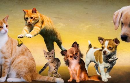 有趣动物 狗 猫 会议 7k图片