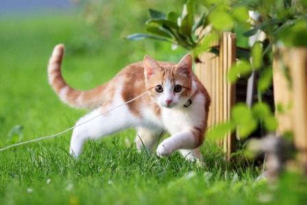 小猫,夏天,绿草地,可爱小黄猫图片