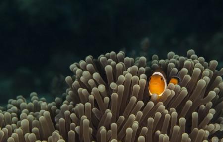鱼,海底,海葵图片