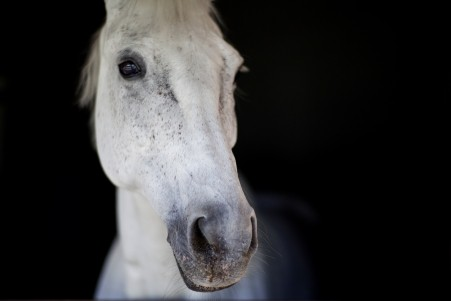 马 美丽眼睛 纯种马 鼻子 5K高端电脑桌面壁纸