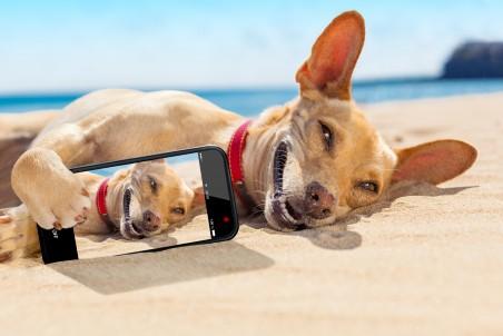 沙滩上可爱的狗狗 手机自拍小狗5K高端电脑桌面壁纸
