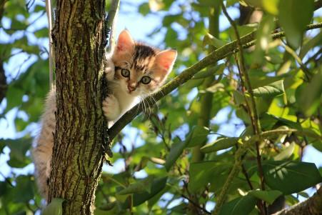 猫 树 绿色 夏天 动物 可爱的小猫 4K高端电脑桌面壁纸
