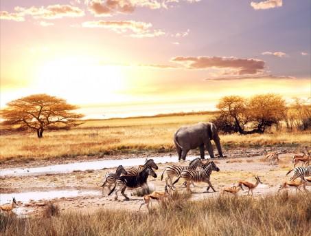 非洲 稀树 草原 动物 大象 斑马 鹿 8K动物图片