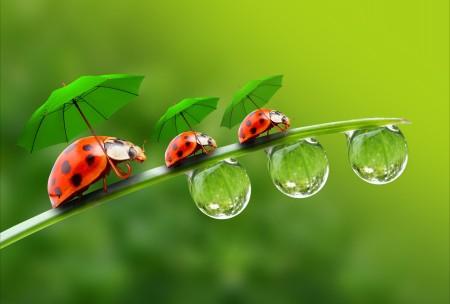遮阳伞 水滴 草叶 瓢虫 创意 5K图片