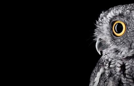 猫头鹰3840x2160壁纸超高清图片下载