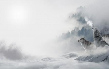 狼 狼群 雪狼 雪天 4K高端电脑桌面壁纸