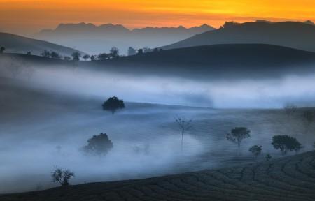 山 茶园 早晨 雾 5k风景高端电脑桌面壁纸