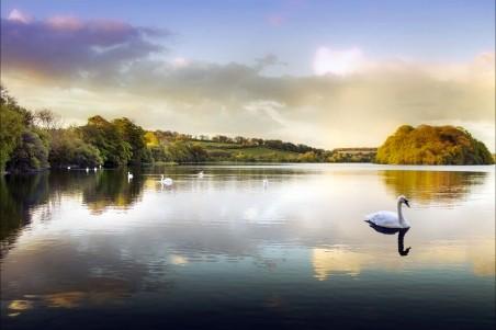 水 湖泊 池塘 公园 天鹅4K图片