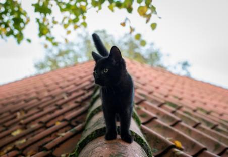 小黑猫,夏天,屋顶,图片