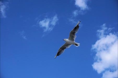 蓝色天空,云,鸟,海鸥,空中,4K高端电脑桌面壁纸