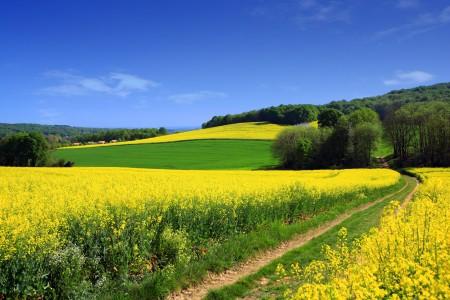 农场 油菜花 树林 蓝色天空 4k风景高端电脑桌面壁纸