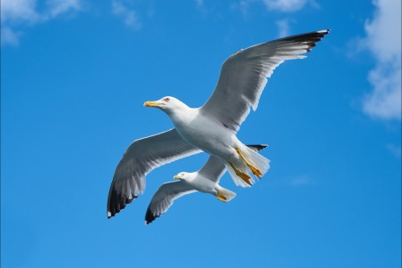 海鸥 鸟 美丽 云 天空 和平 5K图片