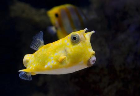 海底 水下 黄色的斑点鱼 可爱的嘴 鱼的摄影图片