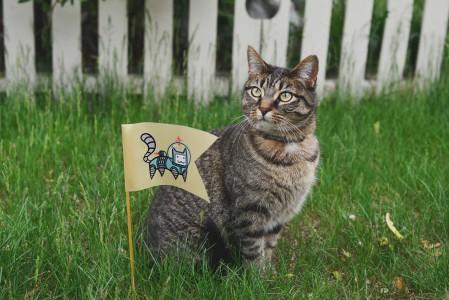 小旗 贴纸 猫咪 4K图片