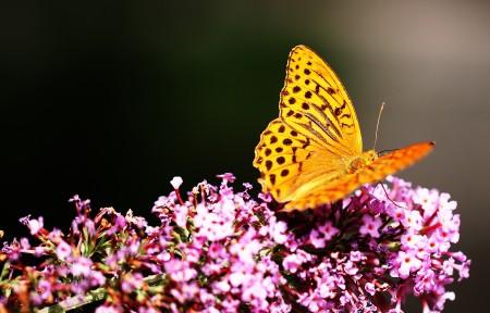 美丽的蝴蝶3440x1440高端电脑桌面壁纸