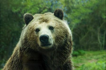 棕熊5K高端电脑桌面壁纸