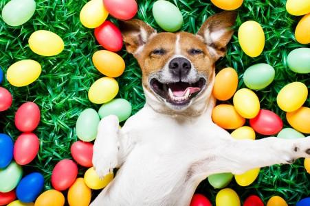 草地 狗 彩蛋 复活节 快乐 可爱狗狗 搞笑表情 5K高端电脑桌面壁纸