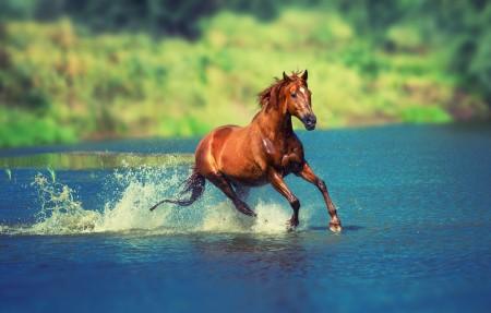 河水,马儿跑步图片