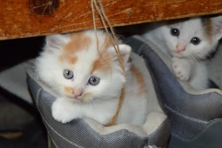 猫 宠物 猫的眼睛 亲爱 可爱的猫咪4K图片