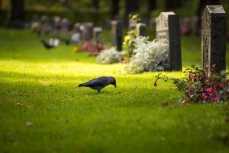 鸟,坟墓,鲜花,墓碑,风景图片