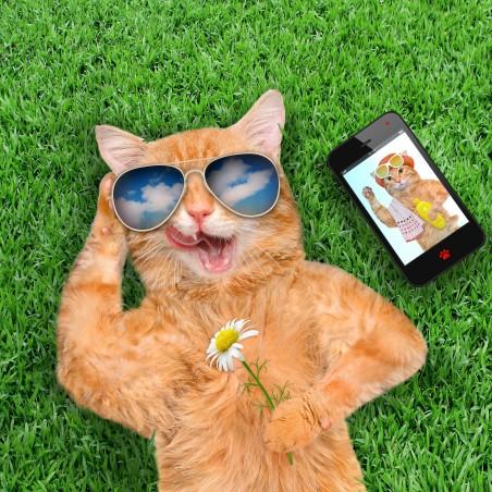 时尚的猫 草地 鲜花 眼镜 智能手机 创意设计 有趣的 4K高端电脑桌面壁纸